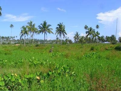 Artikel Lengkap Pengertian Lingkungan hidup serta Upaya Pelestariannya