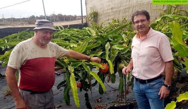 """José Adrián Hernández: """"La pitaya puede ser un cultivo que diversifique la oferta del sector primario insular"""""""