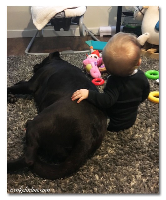 Baby girl with her Labrador Retriever