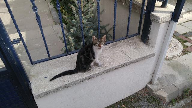 kediler ve insanlar
