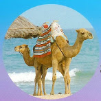 The Camel Tour!