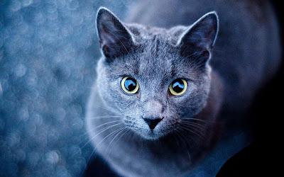 Cute Cats Kitty Pets 24