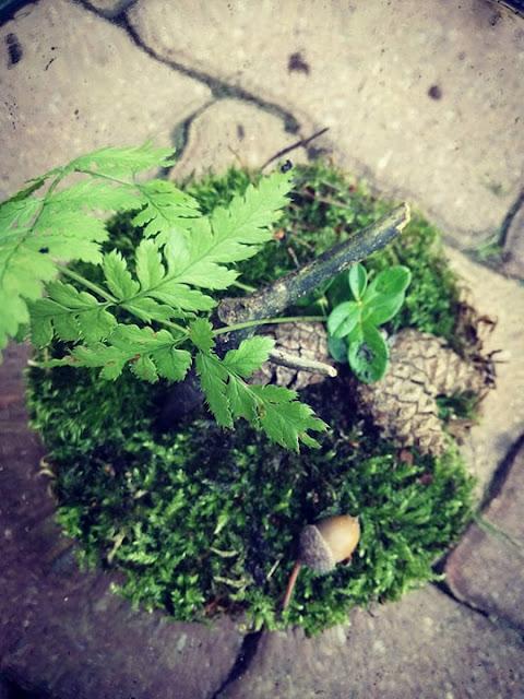 jakie rośliny las w szkle