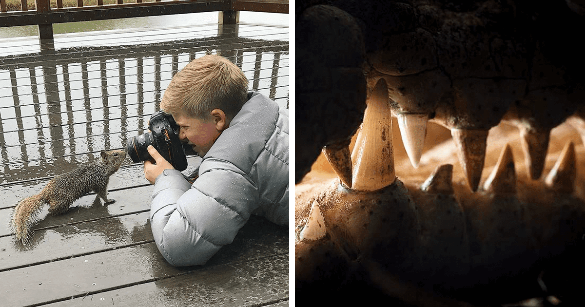 Incredible Pictures By 14-Year Old Robert Irwin, Son Of Steve Irwin And Award-Winning Photographer