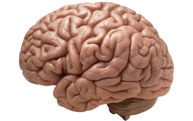هل يمكن للإنسان العيش بدون دماغه؟