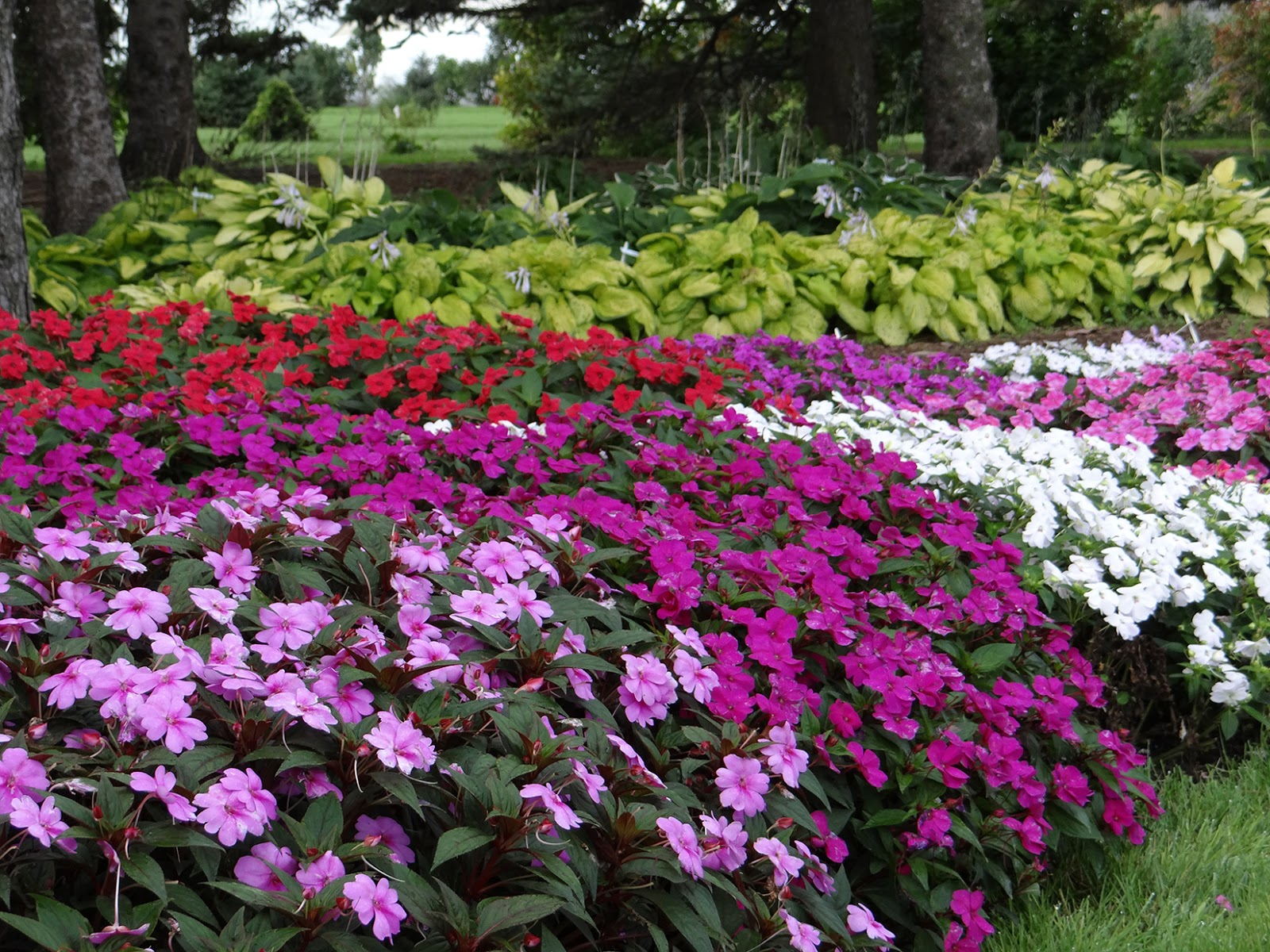 Water wisely annual and perennial flowers new guinea impatiens trial izmirmasajfo