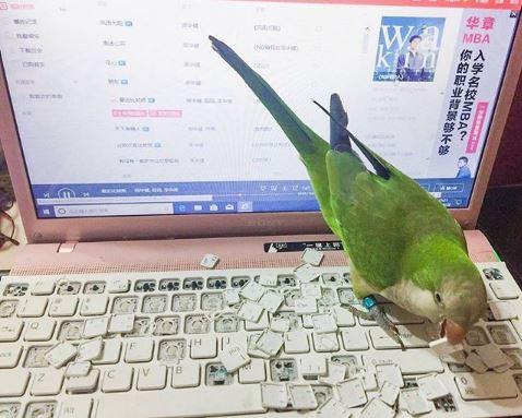 cocota ferrando teclado