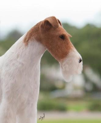 DOG SHOW POOP: COLORADO KENNEL CLUB