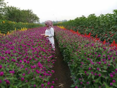 Lokasi Dan Tiket Masuk Taman Bunga BPI Pandeglang