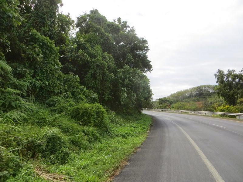 Джунгли у дороги