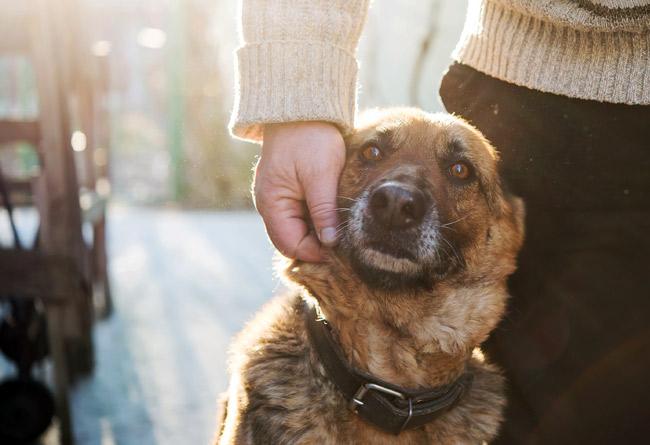 Jak zimą zadbać o psa stróżującego?