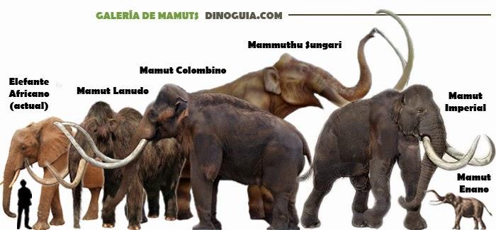 Resultado de imagen para mamut y elefante