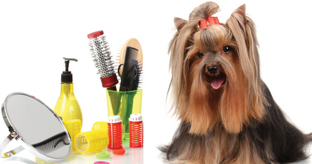 Pet Trainers, Handlers, Groomers and Healers at just one click