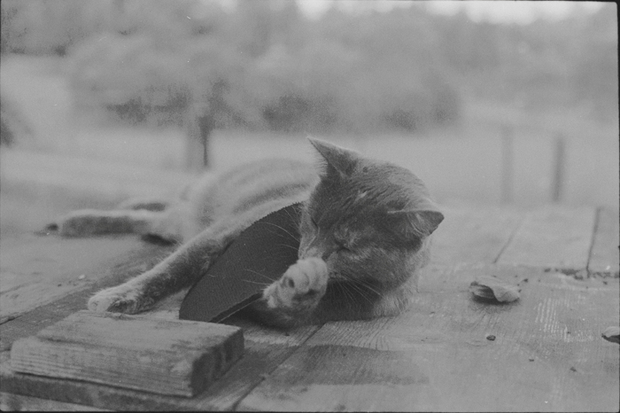 black and white film cat photo