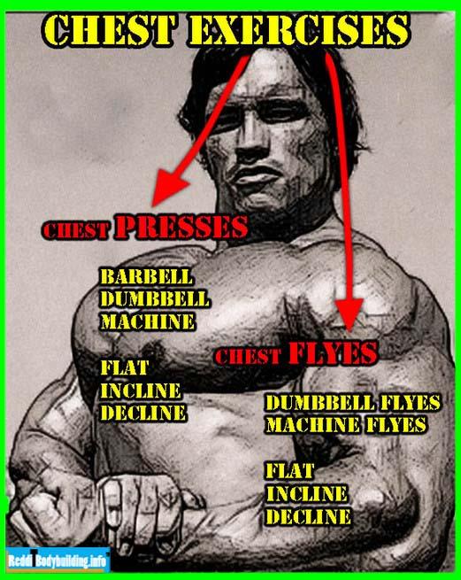 Chest exercises for Body Builder