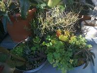 jardines en maceteros