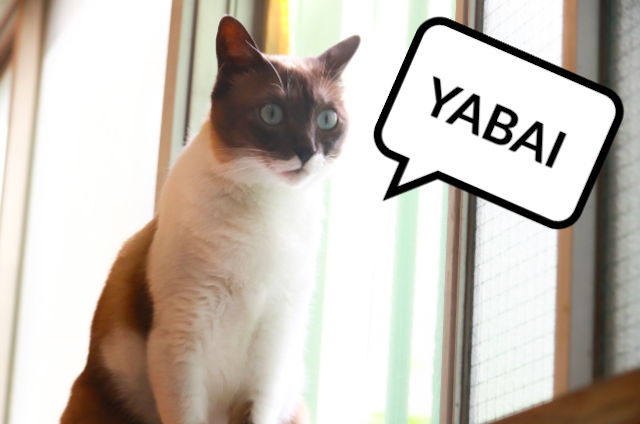 Tertekan karena pergi ke dokter hewan, kucing ini menjadi fasih berbahasa Jepang