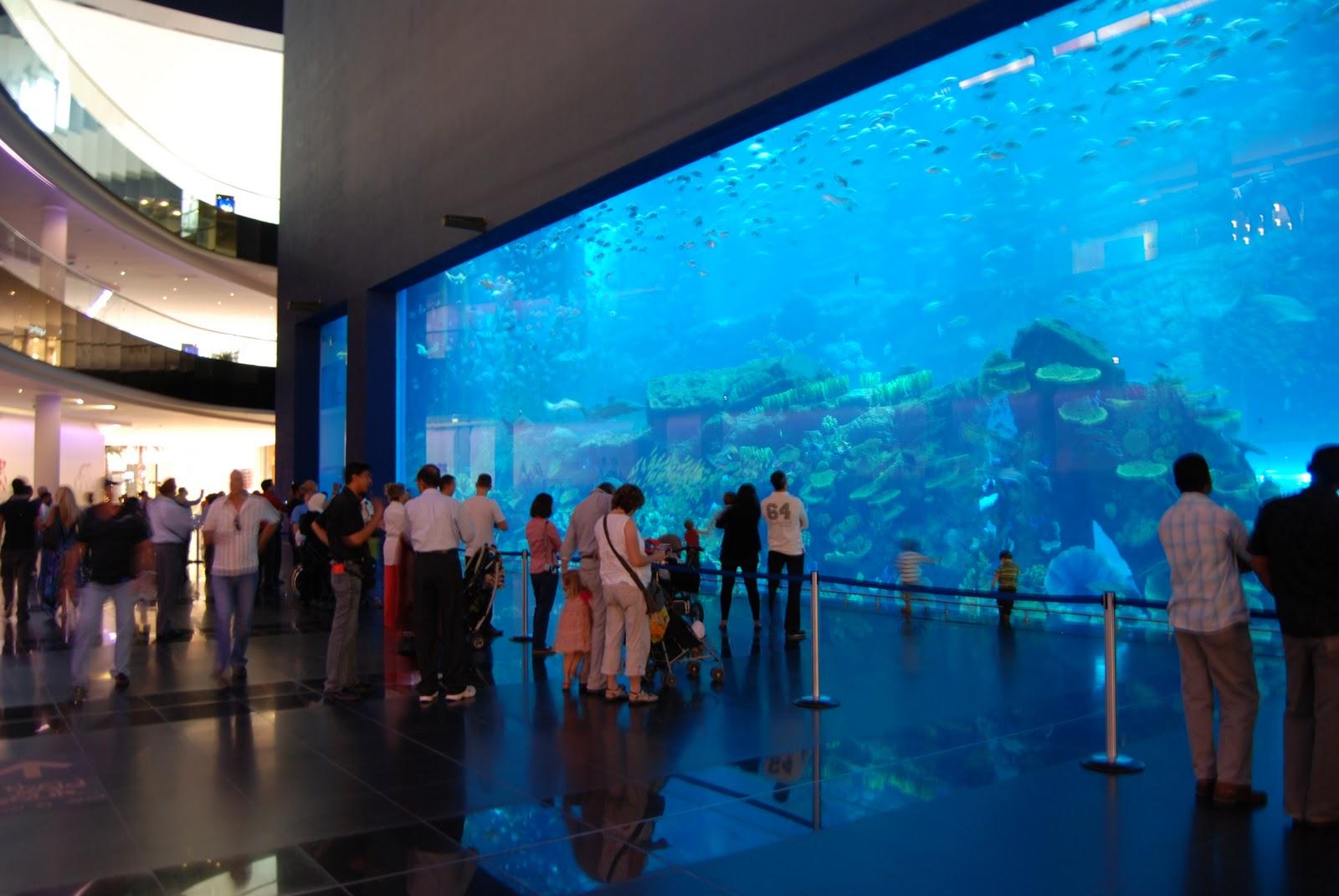 5 Largest Aquarium In The World Ubah Ubah