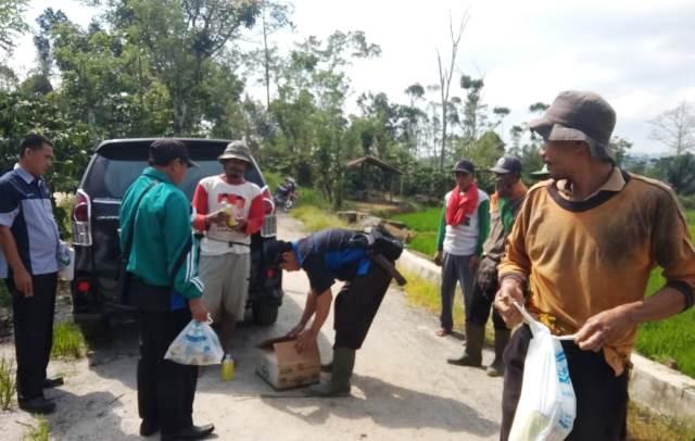 70 Hektare Tanaman Padi Diserang Hama Wereng, Ini Langkah DTPH Lambar