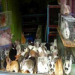 Penjual Kelinci di Songgoriti