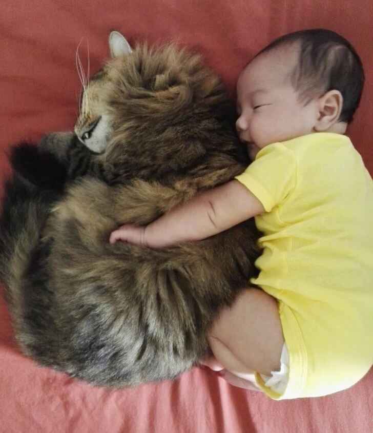 25 Heart-Melting Pictures That Made Even The Toughest Of Us Cry - Cats are kids' best friends.