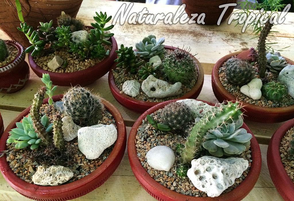 Naturaleza tropical crea arreglos con suculentas hermosos for Varias plantas en una maceta