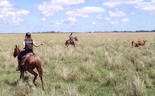 riitta kosonen, riitta reissaa, lassokoulu, argentiina, horsexplore