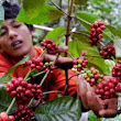 Let we support coffee farmers | Coffeee and Beyond