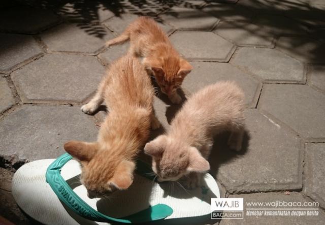 Benarkah Membuang Kucing Merupakan Dosa Besar?