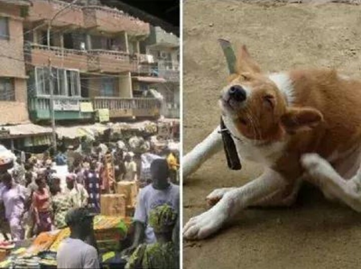 Bloody fight erupts in Kaduna as Igbo trader names his dog Muhammad