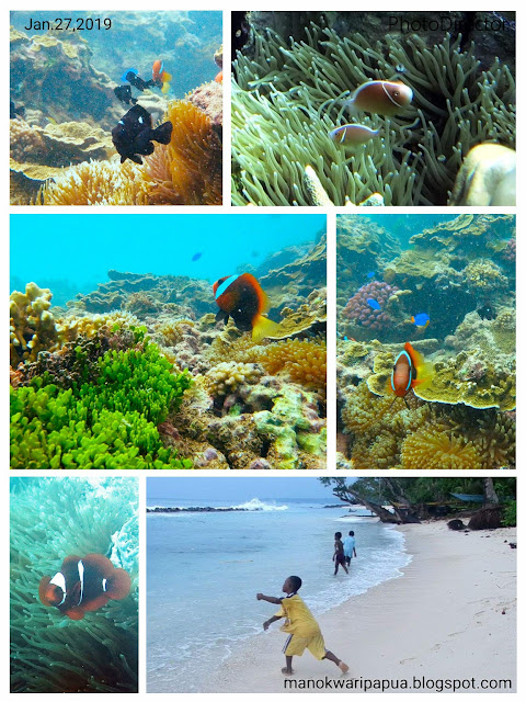 Finding Nemo in Manokwari
