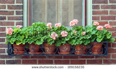 Toda elegância das jardineiras instaladas abaixo da janela