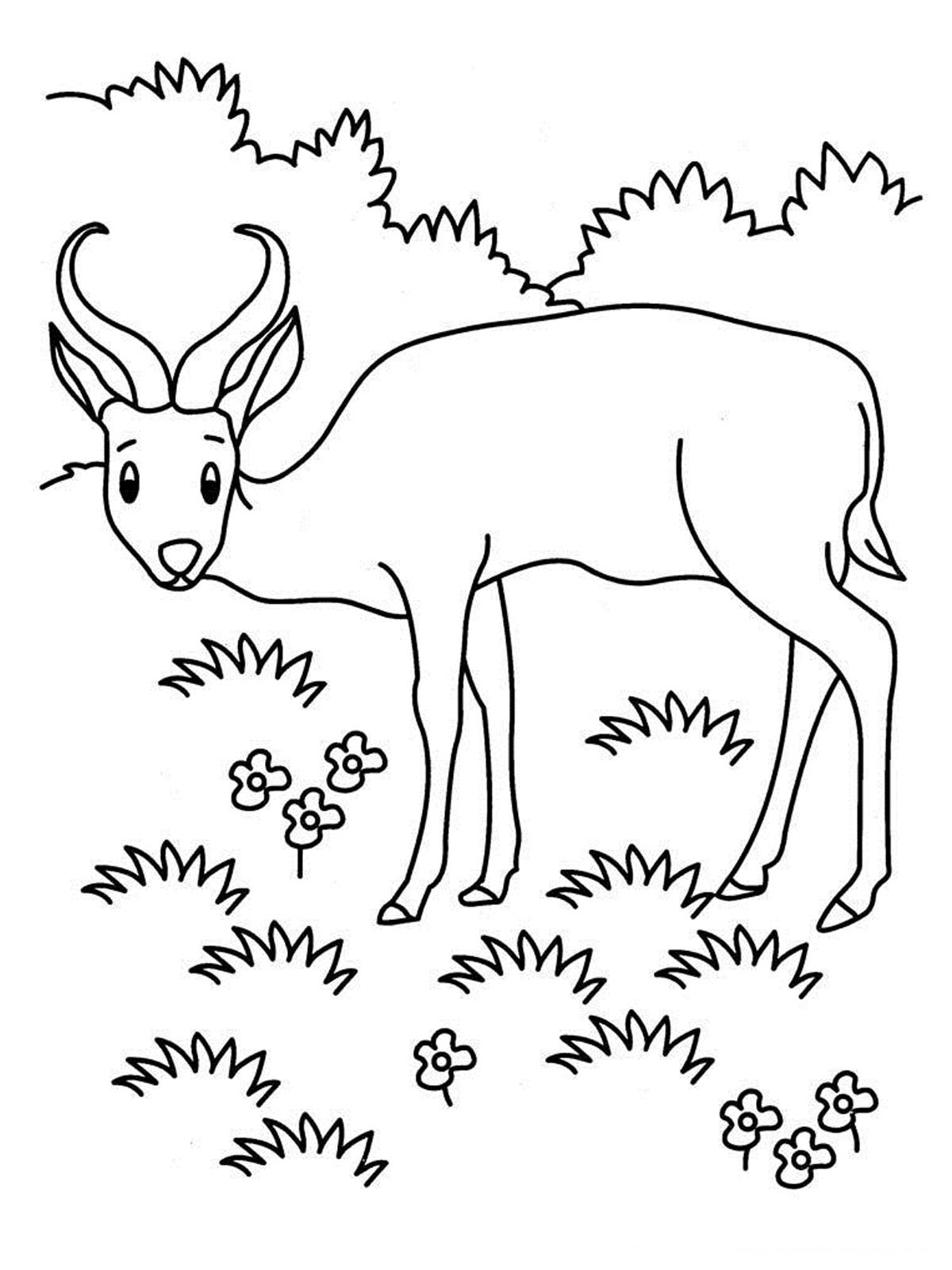 Antelope Coloring Pages Realistic  Realistic Coloring Pages