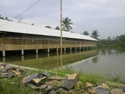 Hasil gambar untuk ternak ikan gurame  menggunakan teknik longyam