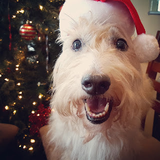 Scottish Terrier Christmas