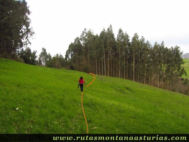 Pradera verde en Corvera, Asturias