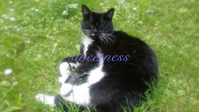 sweetness cat