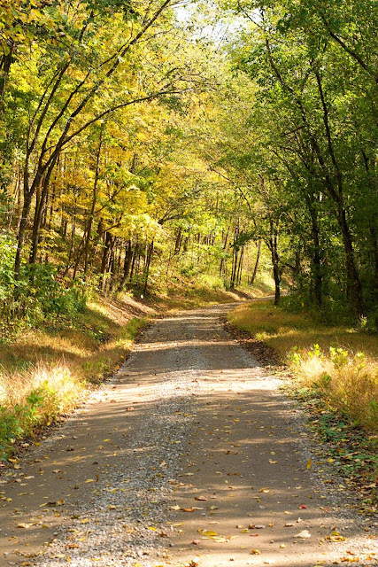 A country road lined with fall trees.