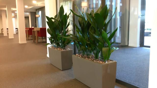 Planten huren voor bedrijven evenementen kantoren