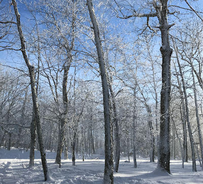 snowday, snow on trees, blue sky, sun on snow, wintergreen resort, 2017, blueridge mountain, virginia