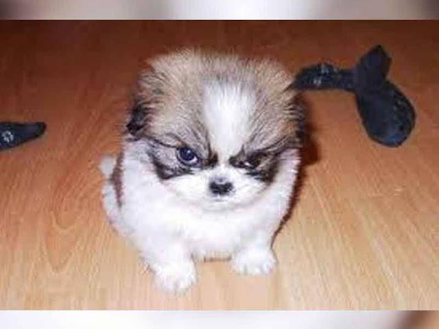 Las cinco cosas que tus perros odian que les hagan