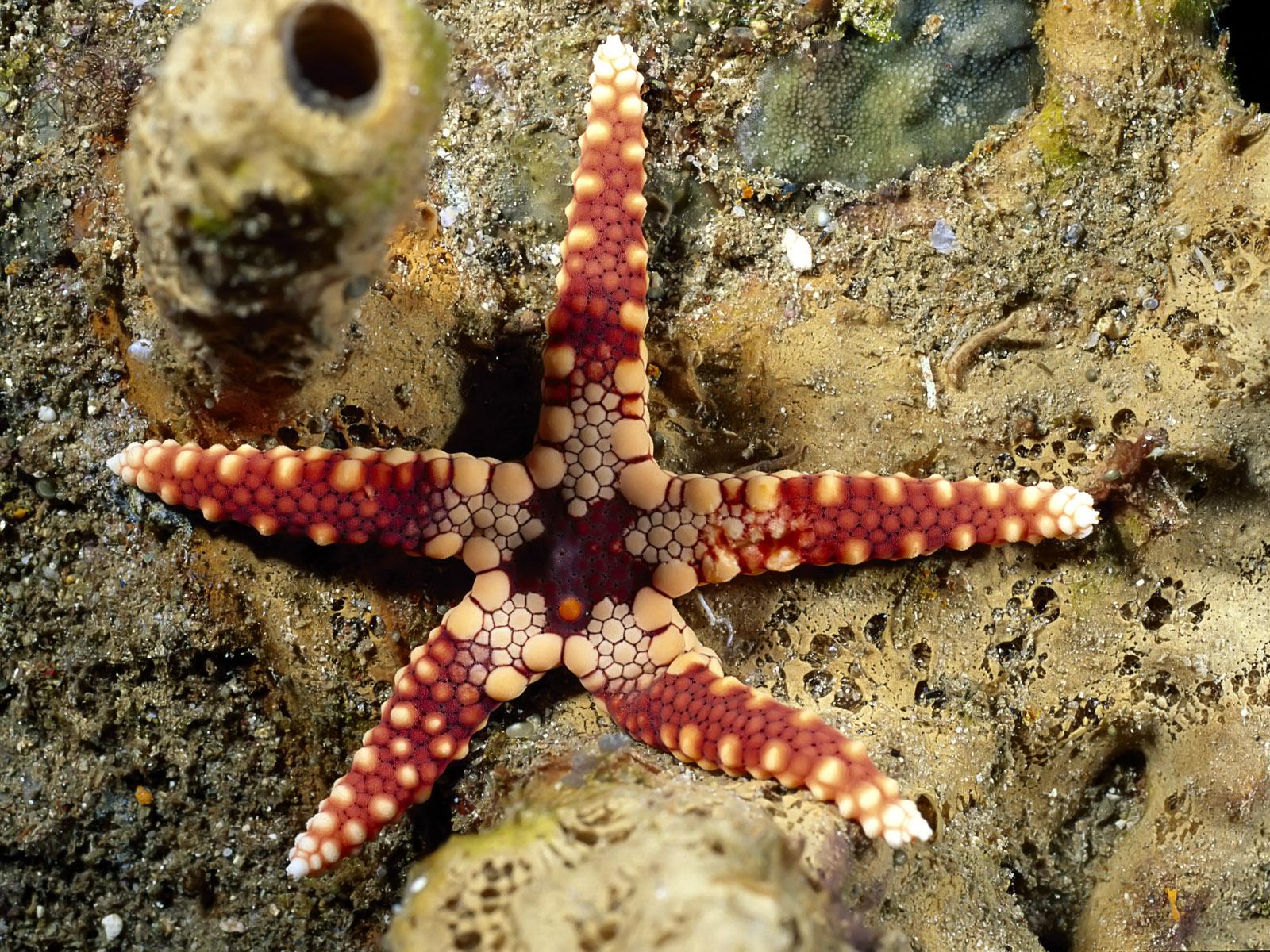 https://3.bp.blogspot.com/-QaUcpP0kW3Q/Tg4r9zKmdjI/AAAAAAAABBY/f93YuOrGwU0/s1600/Underwater%2BWallpaper%2B%25252881%252529.jpg