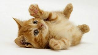 Terungkap! Inilah Alasan Kenapa Kucing Menoleh Saat Kita Panggil