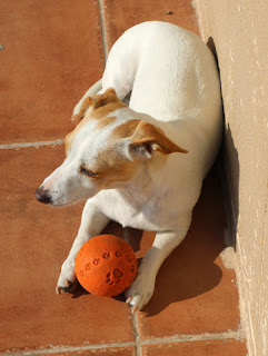 Thelma holding her ball, waiting for us