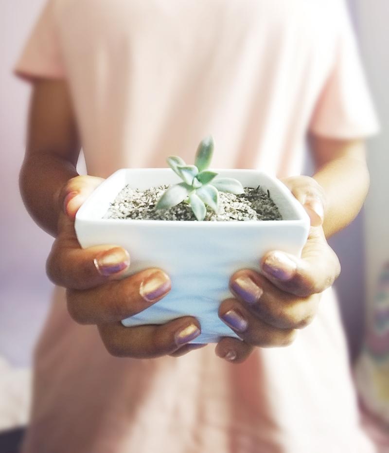 Como cuidar de mudas de suculentas