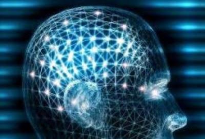 Cosa controlla evoluzione cervello: gene Clock