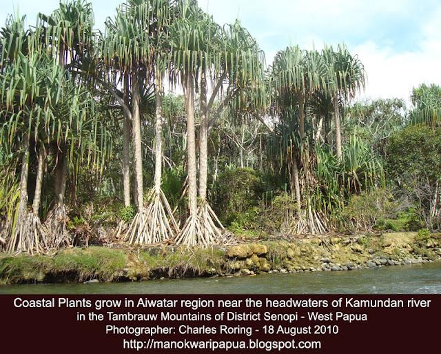 Ekowisata Tambrauw