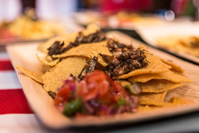 tacolautanen heinäsirkoilla tacos and cricket tomaattisalsa ohje_