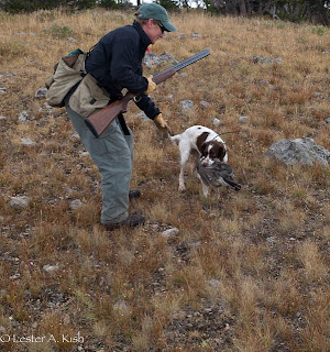 Brittany retrieving a blue grouse