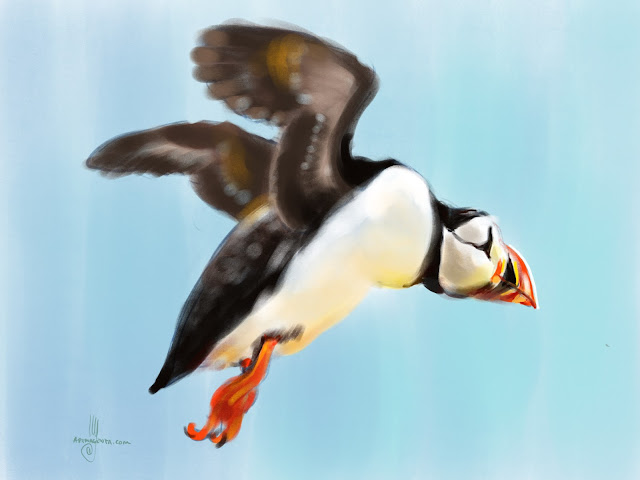 Atlantic Puffin bird painting by Artmagenta